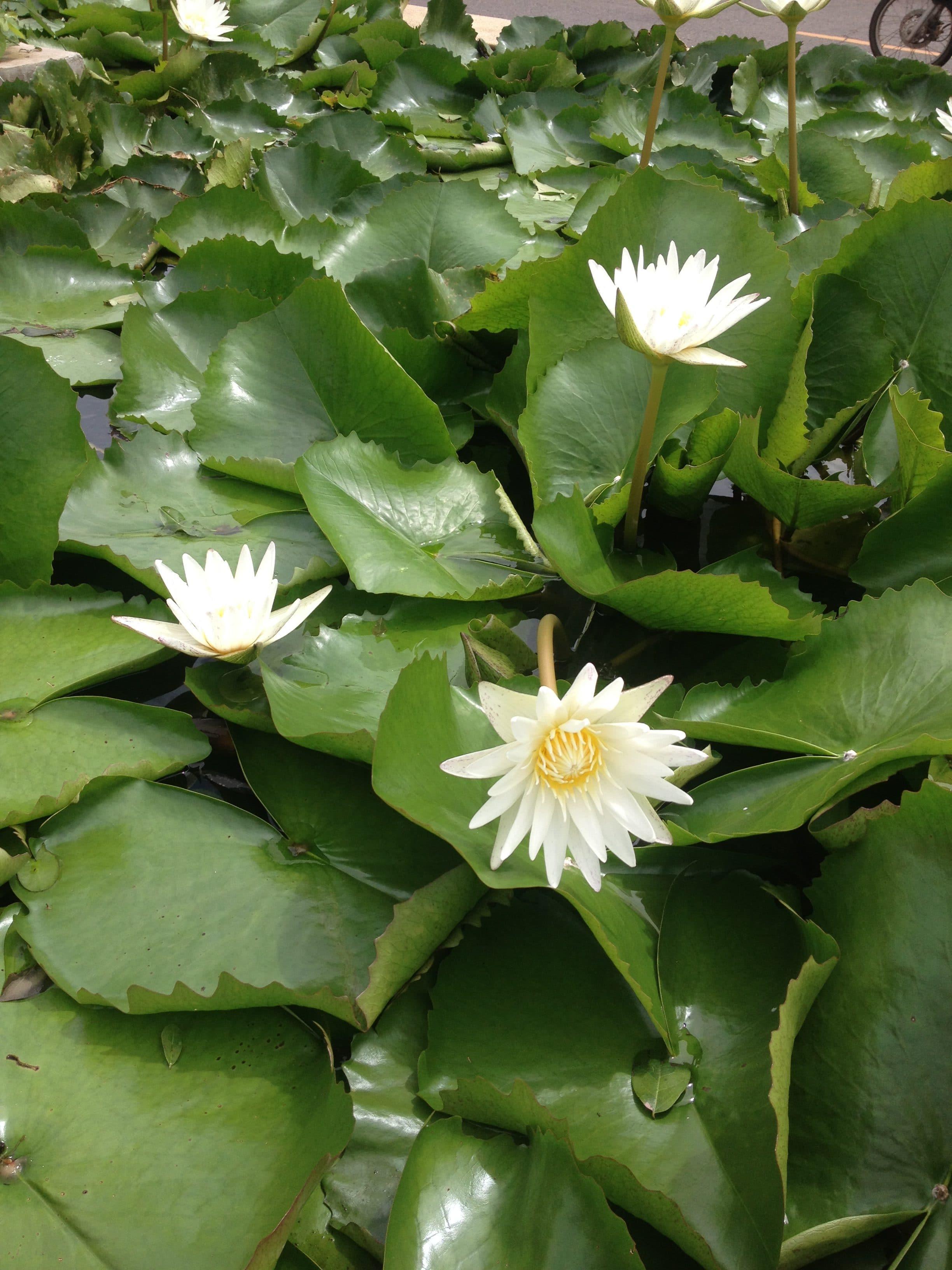 Thailand sommerretreat i Phuket blomster
