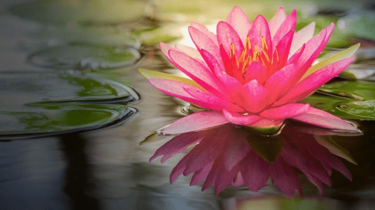 Blomst symbol indre styrke gennem coaching
