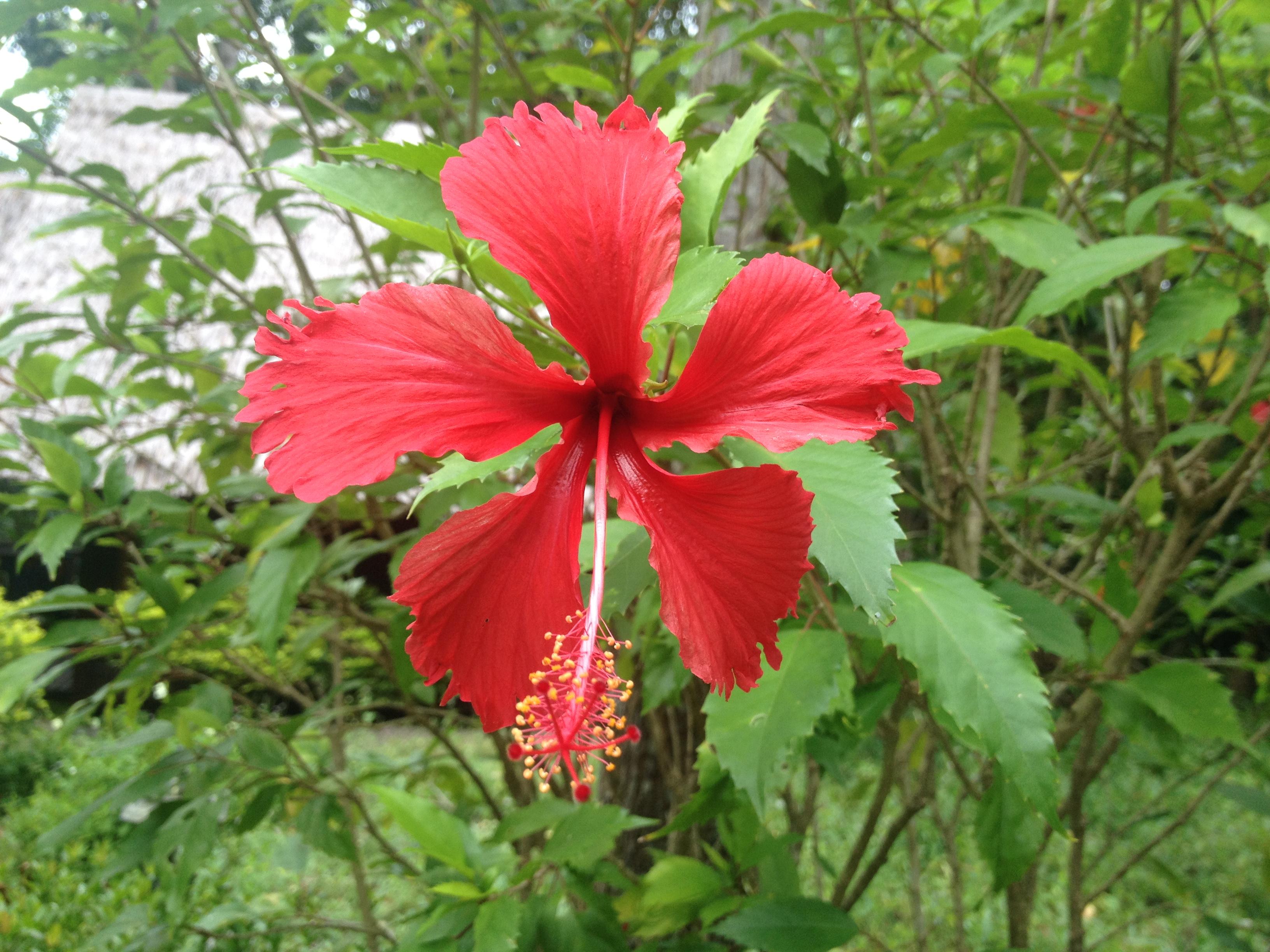 retreat til That Phanom blomst