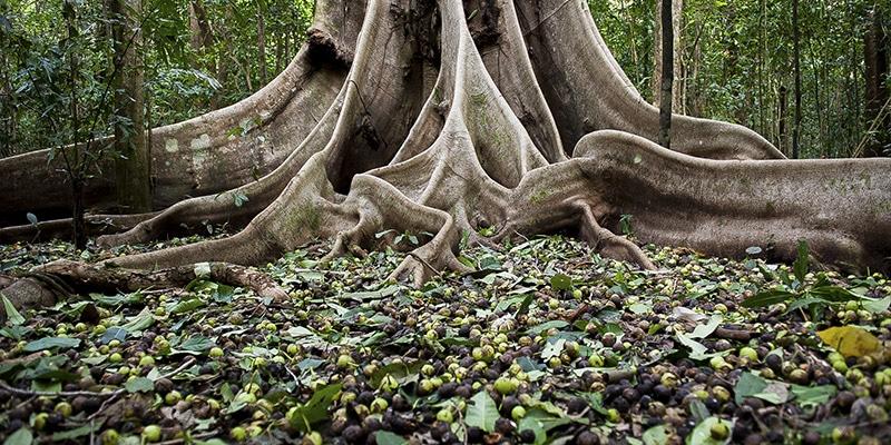 trærødder symbol familieopstilling